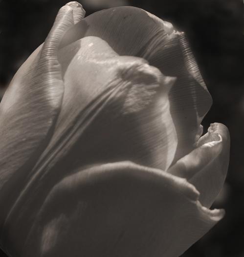 Françoise Coutelet : Fleurs