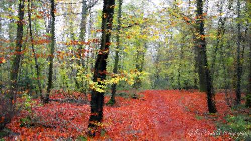 Gilbert Coutelet : Rouge d'automne